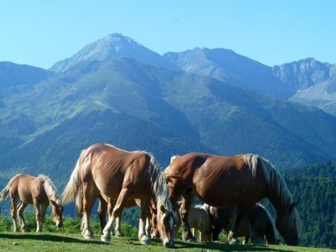 Le Pic du Midi de Bigorre depuis les prairies d'Esquiou