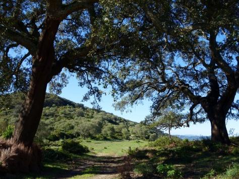 Parc Naturel Los Alcornocales entre Jimena de la Frontera et Ubrique