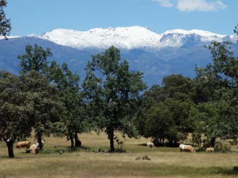 La Sierra de Gredos fin mai