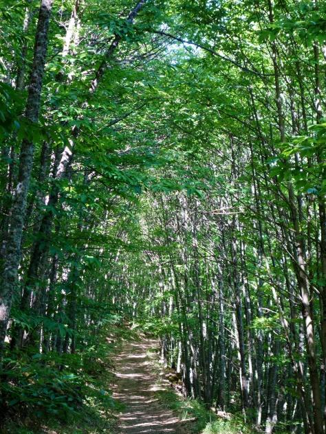 Chemin dans la châtaigneraie d'Hervás