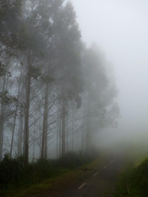 Jour de brouillard sur le Camino