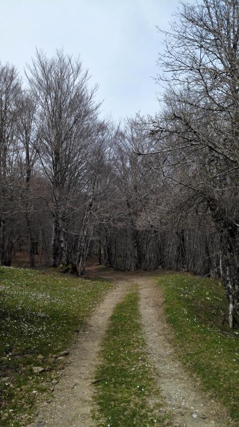 Le chemin sur la dorsale des Nebrodi