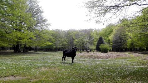 Dans le parc d'Aspromonte : je ne suis pas seul