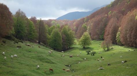 Dans le parc régional des monts Simbruini